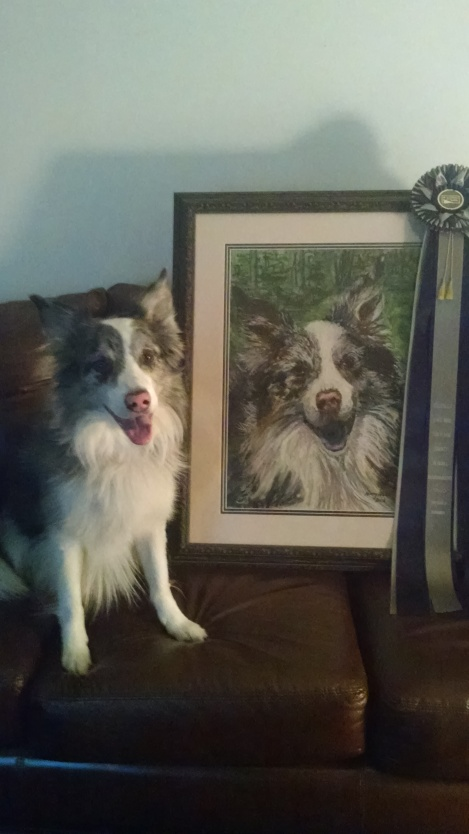 """""""Danny"""", owned by Lauralee McGuire, sitting next to the portrait and rosette he received for earning the highest honor in NAFA flyball - the Hobbes Award."""