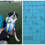 Oriole member and agility instructor Janet Gauntt and Border Collie Sequel earn their 100th Qualifying run in Masters Standard with a 1st place at the June 2014 Keystone Agility USDAA trial.