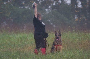 Diana Reich and her German Shepherd Kemah, holding up the tracking glove: a TDX pass ! This photo was taken at the German Shepherd Tracking Test held in fall 2013 at Fair Hill, MD. Diane Reich is an Oriole member; Nancy Skinner, an Oriole member, was the Chief Tracklayer, and a number of Oriole students and instructors were there as working volunteers. As is the case in the local tracking community, members of the German Shepherd Club came to help with the 2014 Oriole Tracking Test also at Fair Hill.