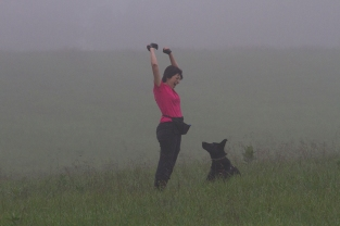 Donna Murray with her Black German Shepherd Laelia, holding up the tracking glove: a TD pass! This photo was taken at the German Shepherd Tracking Test held in fall 2013 at Fair Hill, MD. Diane Reich is an Oriole member; Nancy Skinner, an Oriole member, was the Chief Tracklayer, and a number of Oriole students and instructors were there as working volunteers. As is the case in the local tracking community, members of the German Shepherd Club came to help with the 2014 Oriole Tracking Test also at Fair Hill.