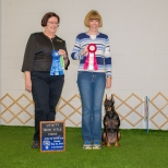 "Debbie Kaminski and her German Pinscher ""Indy"" earned their Utility Dog title at Oriole DTC's May 24, 2015 obedience trial. She won the class with a 189 and earned her UD in only nine trials. She is the 4th German Pinscher to earn an AKC Utility title."