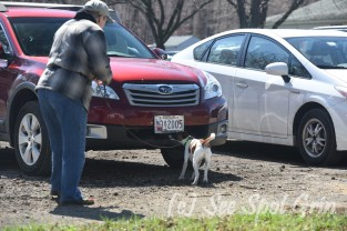 Member Betty Gardener handling her dog Rascal as they search a car at the NW1 trial during the ODTC Nose Work trial in Stevensville, MD. Nice leashing handling there, Betty.