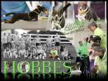 Oriole Flyball training director Carle Lee Detweiler and Heidi earned the rare distinction earlier in 2014 of acquiring the 100,000 racing points needed for the coveted Hobbes flyball title.
