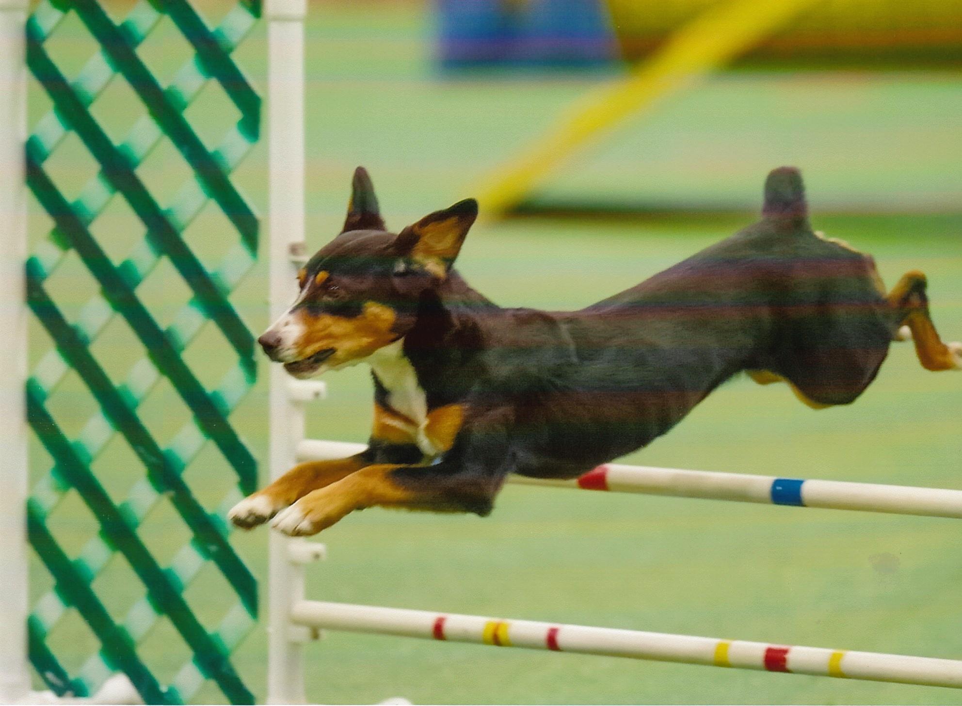 Oriole Dog Training Club