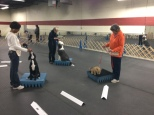 Some future stars in training in the Puppy K class of Fall 2014 taught by Sue Carlton