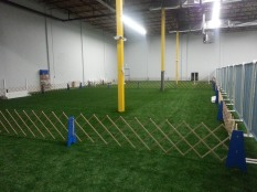 Obedience Training rings on the left half of the sports field during a normal weekday training night.