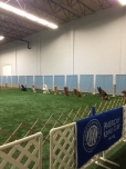 A line of dogs in a sit stay waiting patiently for their handlers to return.