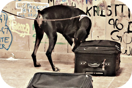 thaler-on-luggage2
