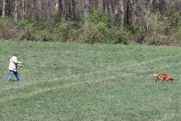 Oriole Dog Training
