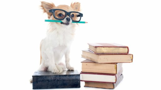 chihuahua_with_books_1448759302